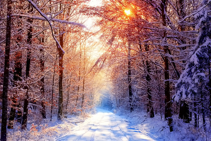 winter-nature-backgrounds_900x600
